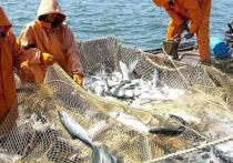 Поиски «большой рыбы»