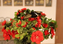 В ЮжноСахалинске работает музей крылатых цветов