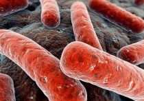 Ежегодно во всем мире 24 марта отмечается Всемирный день борьбы с туберкулезом
